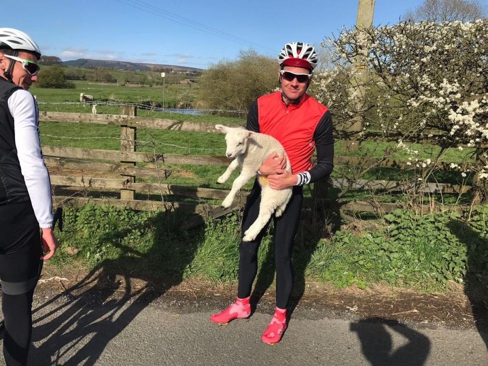 Brownlee lamb rescue.jpg