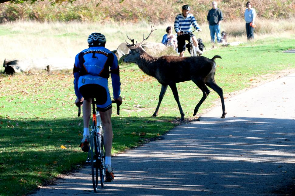 A good reason not to go full gas in Richmond Park (CC BY-NC 2.0 aglet:Flickr)