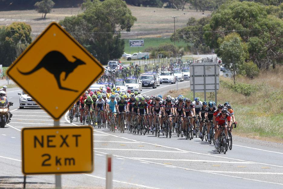 Kangaroo sign, Tour Down Under 2015 (picture credit Regallo)