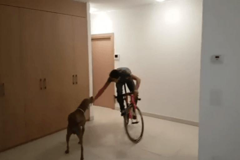 Alberto Contador and dog (source - Alberto Contador on Instagram).PNG
