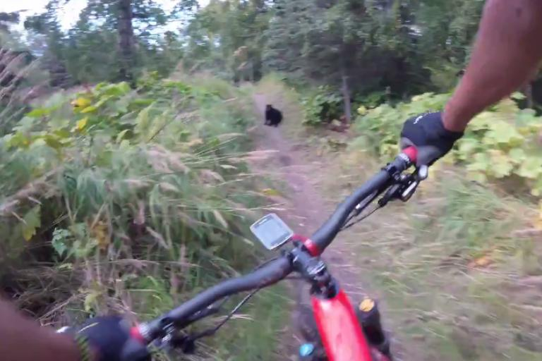 Bear on trail video still (via pfffhuckit on Reddit).png