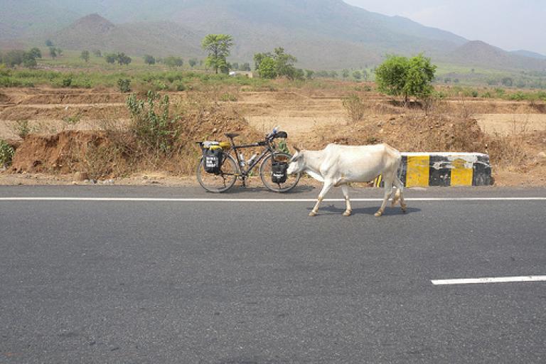 Globe Cycle India.jpg