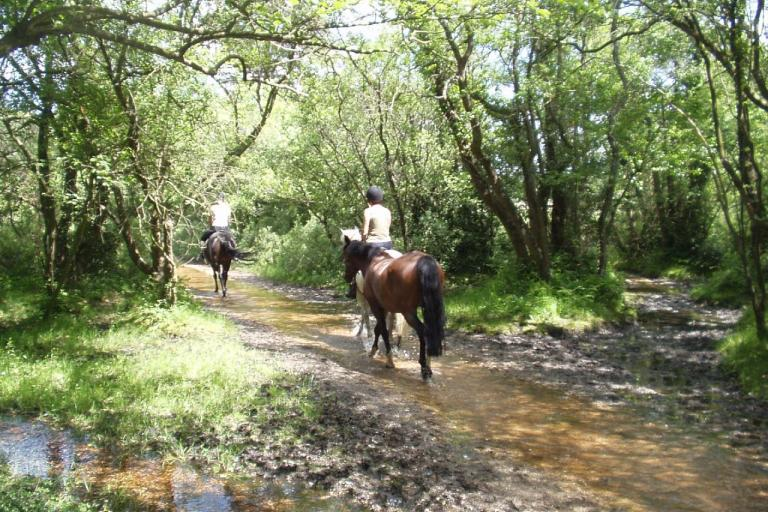New Forest horse riders (Flickr Creative Commons - Wight Badger)