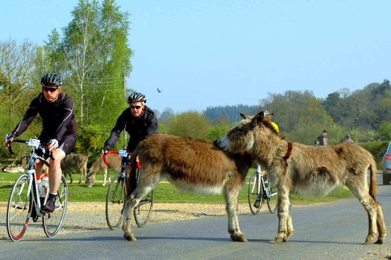 Sportive riders and donkeys in the New Forest (CC BY-NC-SA 2.0 licenced by iNew Forest:Flickr)