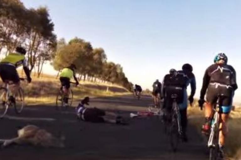 Kangaroo collision NSW April 2016 (Willis Alexander YouTube video still).JPG