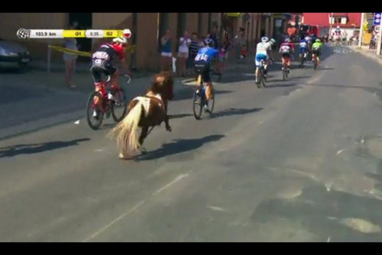 Pony joins in at the Tour of Poland.jpg