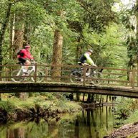 Brewin Dolphin New Forest Summer Sportive