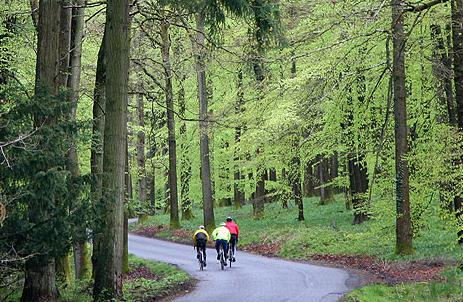 Forest of Dean (image via Wheels in Wheels website).png
