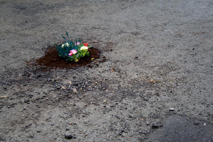 pothole_garden_04.jpg