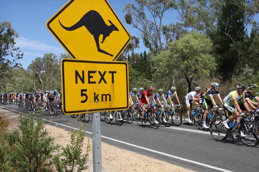 Peloton passes kangaroo sign (photo - Santos Tour Down Under:Regallo)