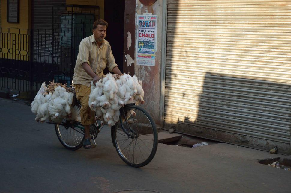 Chicken bike in Kolkata (CC licensed by Biswarup Ganguly)