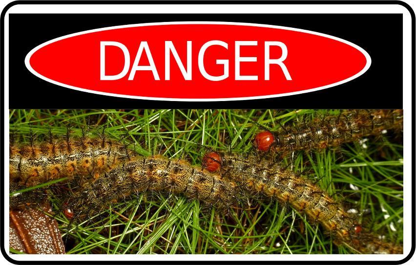 Danger_caterpillars_(CC_Andreas_Kay-Flickr).png