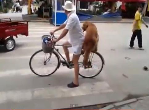 Dog on bike in China