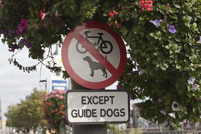 Except_Guide_Dogs_(licensed_by_William_Murphy_under_CC_BY-SA_2.0_on_Flickr)
