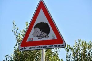Mind the Hedgehog (credit Naturetrustmalta.org)