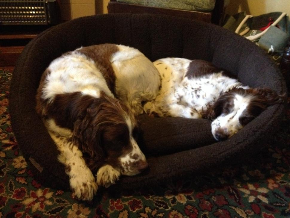 Rosie and Izzy.JPG
