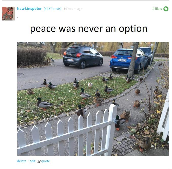 Duck comments 2