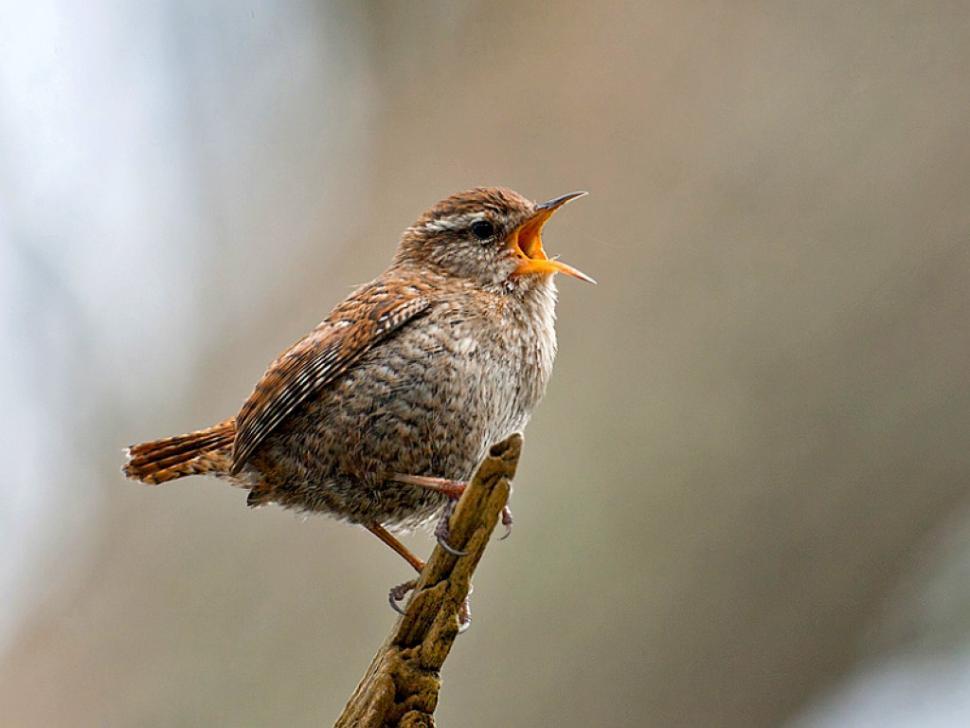 Singing bird.jpg