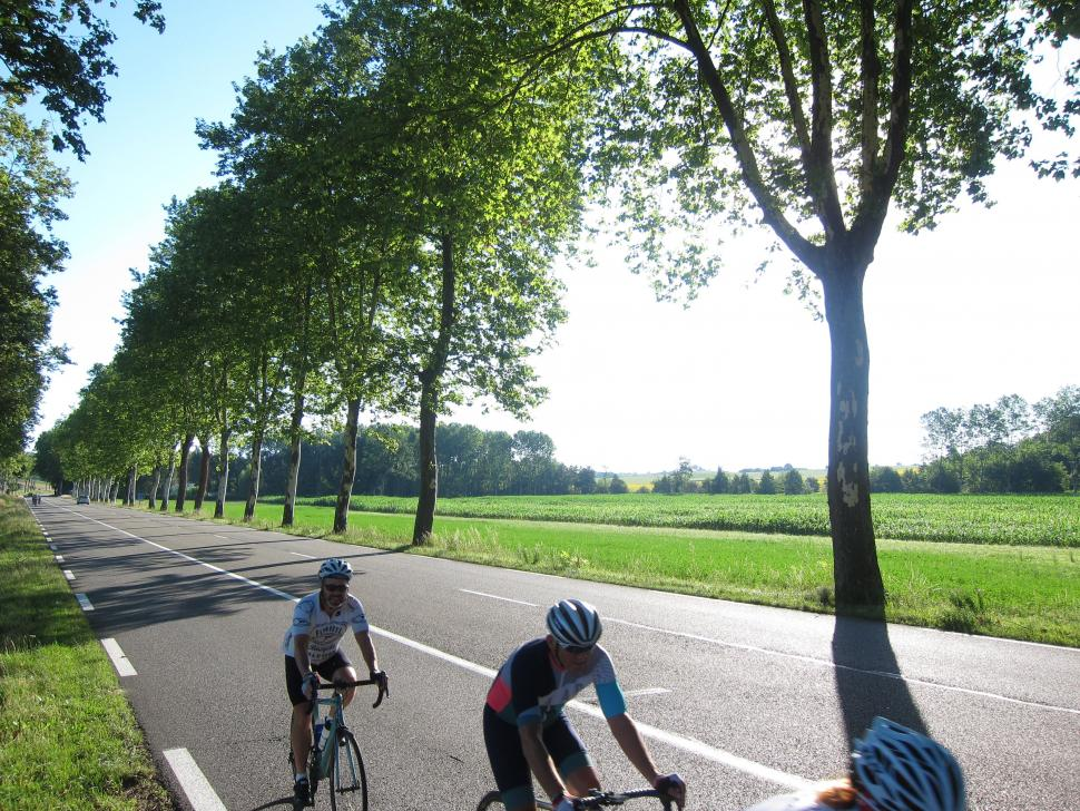 Tour De Force Pt 1 - Tree Lines.jpg