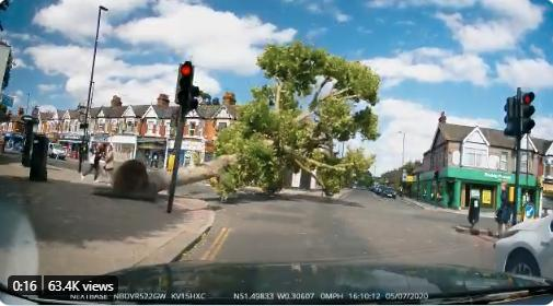 """Labour MP uses falling tree clip to argue against Low Traffic Neighbourhood plans; Helmets not designed to reduce injury """"when impacts involve a car"""", says Giro developer; Cyclists attacked by rogue buzzard; Bike theft 'up by 50%' + more on the live blog"""