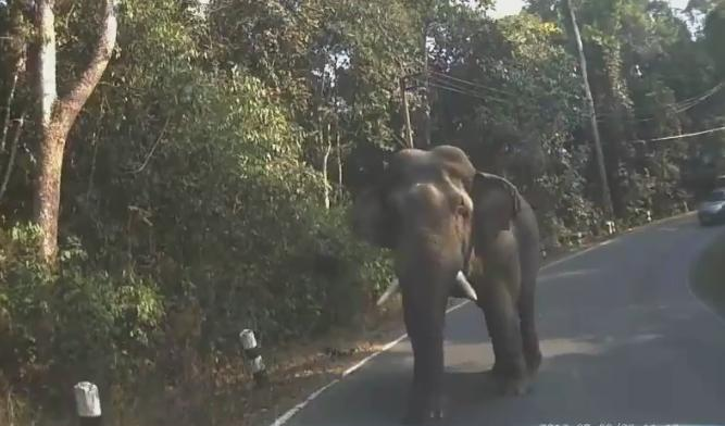 Yoyo the elephant (via Facebook).PNG