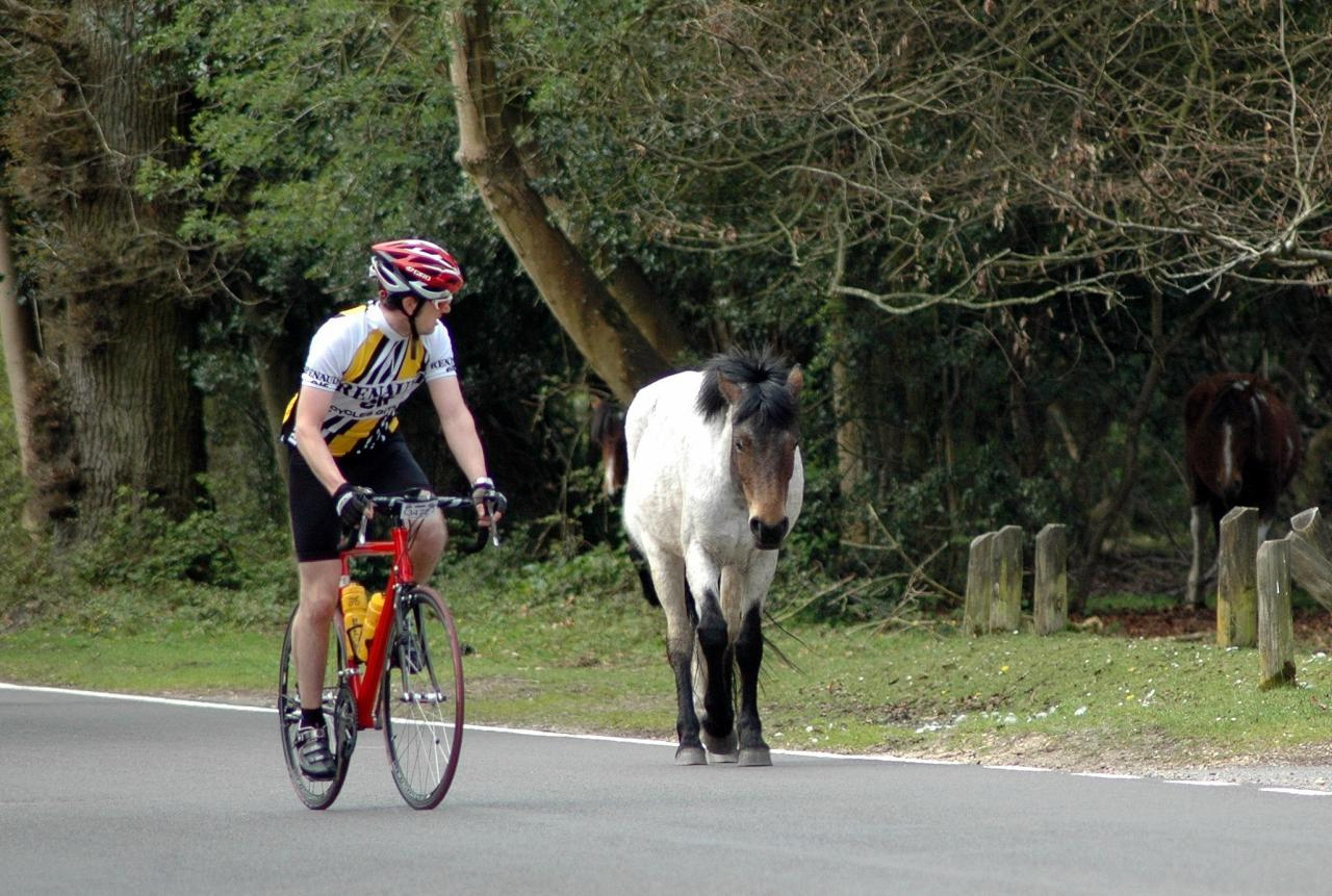New Forest sportive organiser accused of vandalism after spray painting arrows on road