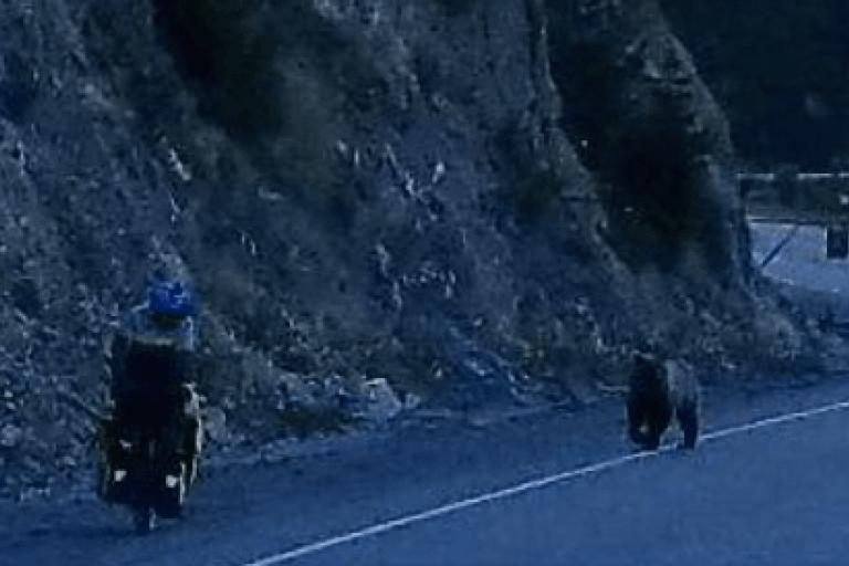 Cyclist and grizzly bear.png