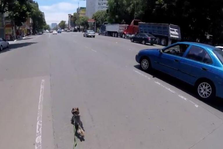 Cyclist chases dog in Mexico City traffic.JPG