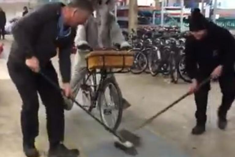 Elephant Bike curling.JPG