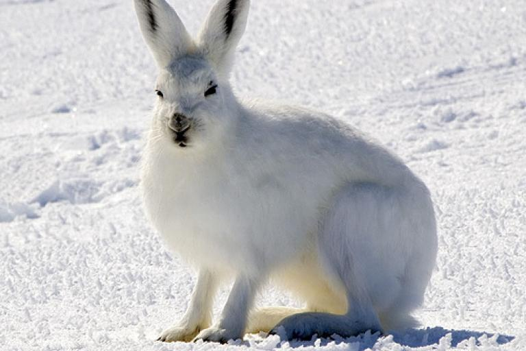 Camouflage - great for Arctic hares, not so clever for bollards.jpg