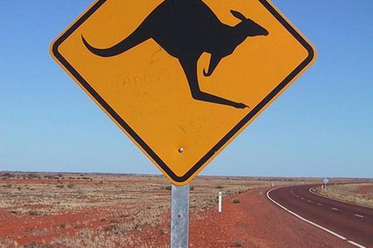 Kangaroo (copyright Jpp).jpg