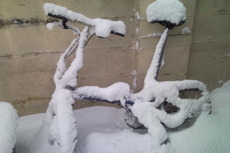 Ridgeback folder in the snow