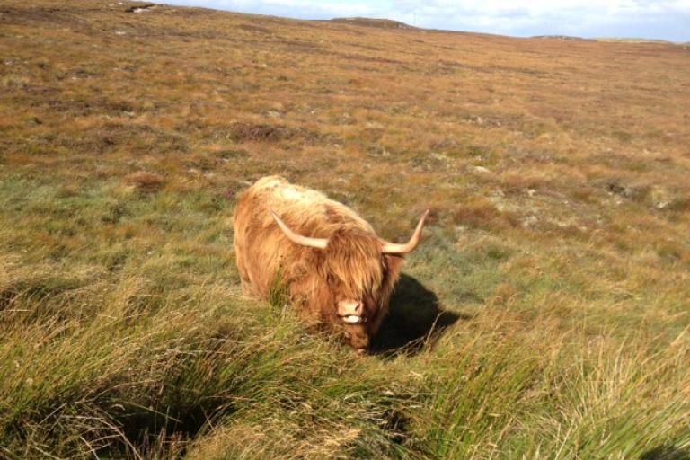 Deloitte RAB 2012 Arrival in Scotland