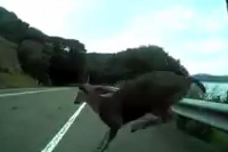 California cyclist surprised by deer (Silas Patlove YouTube still)