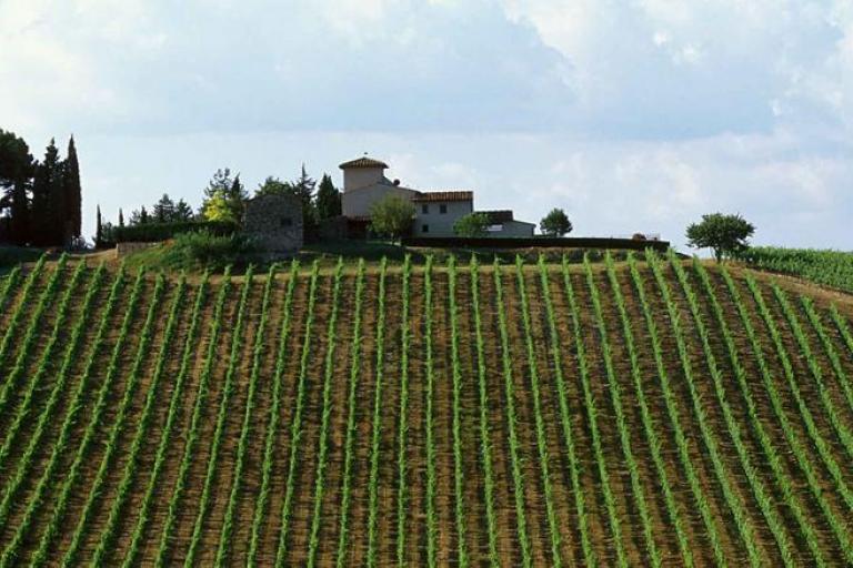 Chianti Classico vineyards (source RCS Sport)