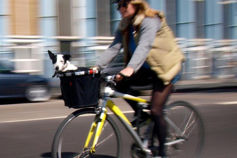 Dog in bike basket (copyright Simon MacMichael)
