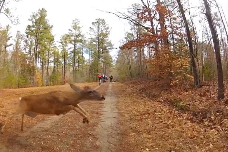 Monster Crosser vs deer