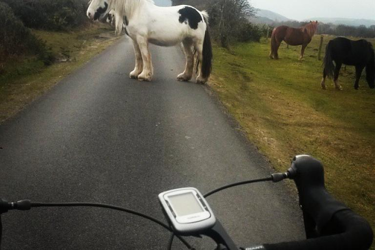 Philip Lawrence - Horse in the road (image via Instagram)