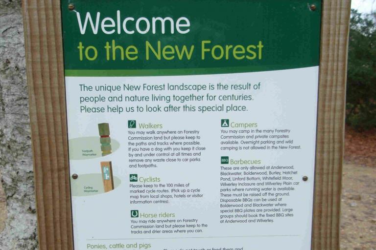 Welcome to the New Forest