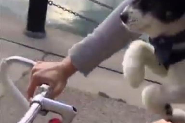 Pedalling pup (via Tanya Reid on Facebook).JPG